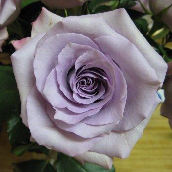 flowertwo.jpg