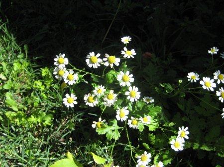 26flowers