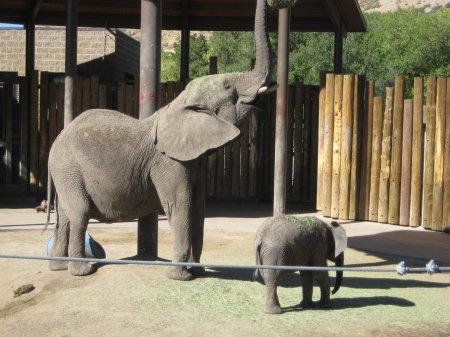 10elephants
